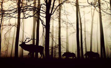 Najdziwniejsze zwierzęta świata - zwierzęta